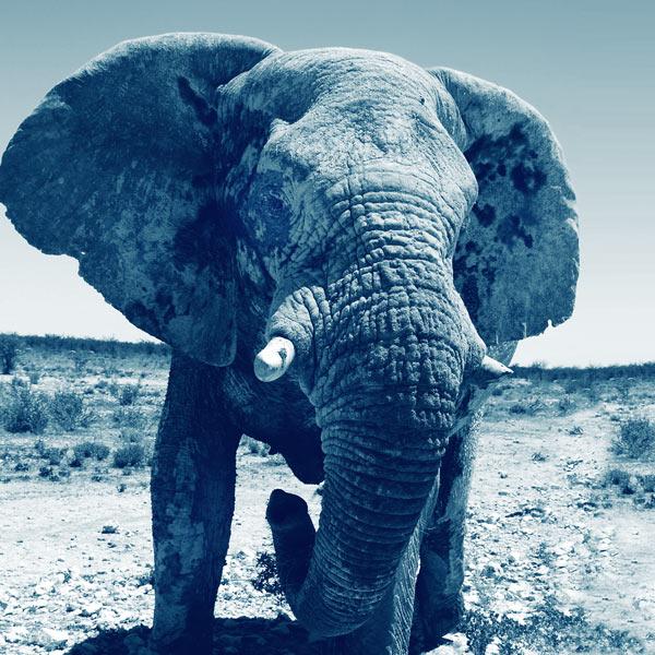 voyage safari luxe namibie