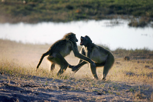 agence de voyage botswana genève mungo park