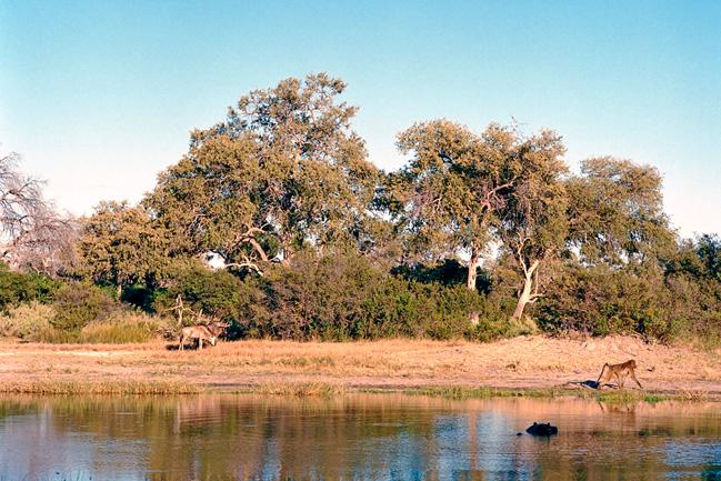 Un safari avec Mungo Park