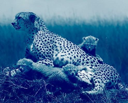 Votre agence de voyage spécialiste de l'Afrique - Mungo Park