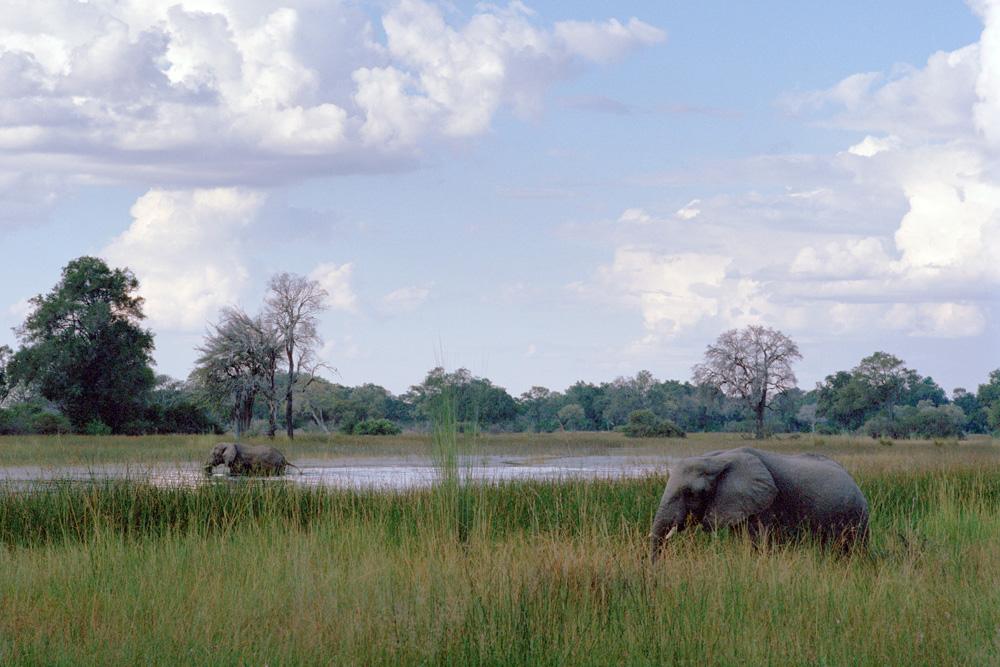 Elephant au Botswana avec Mungo Park