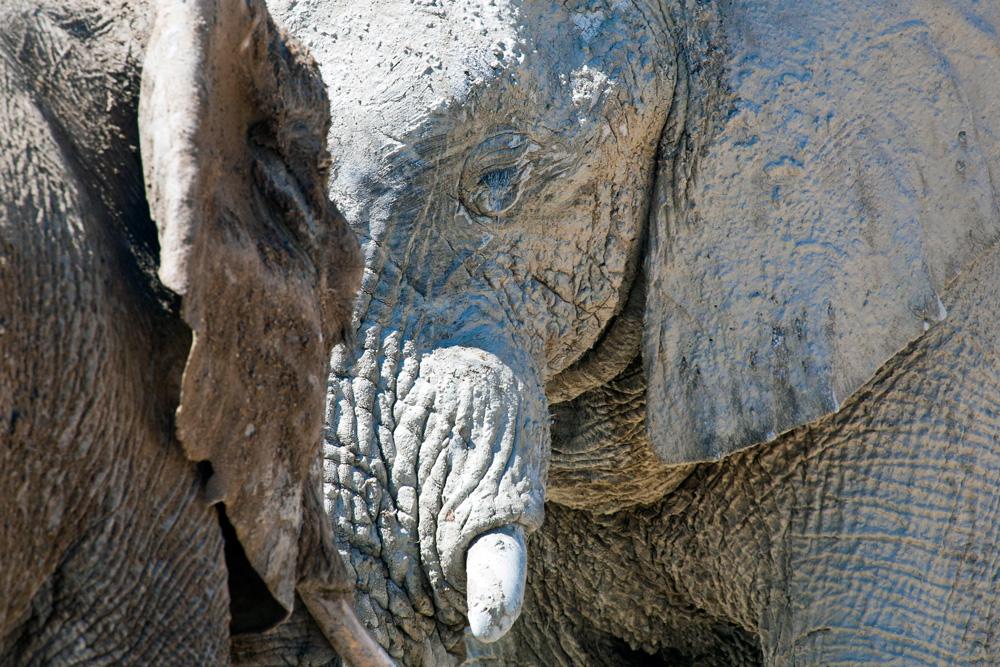 Des Elephants en Namibie