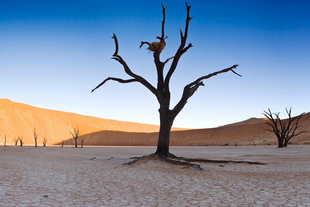 Désert du Namib en Namibie avec Mungo Park