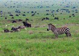 Plaines de la Tanzanie avec Mungo Park