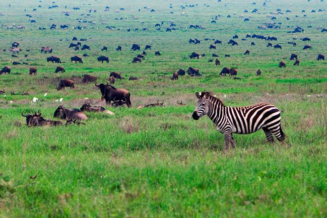 Serengeti Mungo Park - voyage en afrique genève