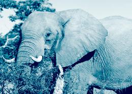 Des lodges dans le Delta de l'Okavango et voir les chutes Victoria