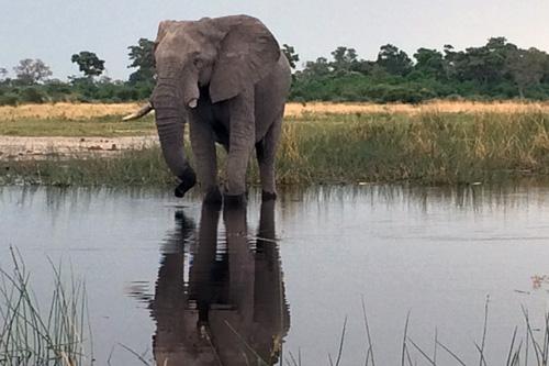 Eléphant Mungo park safari voyage en afrique