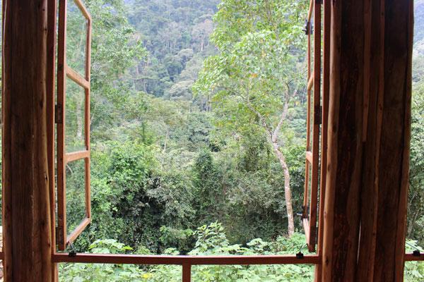 gorilles voyage afrique safari ouganda