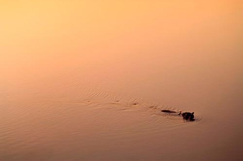 hippo Mungo Park agence afrique à Genève