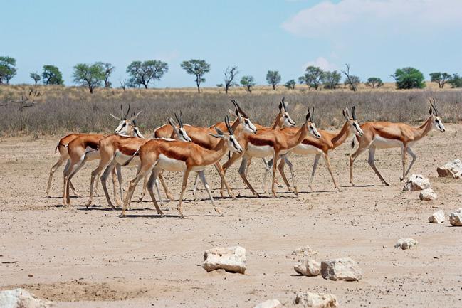 Animaux sauvages en afrique avec l'agence Mungo Park