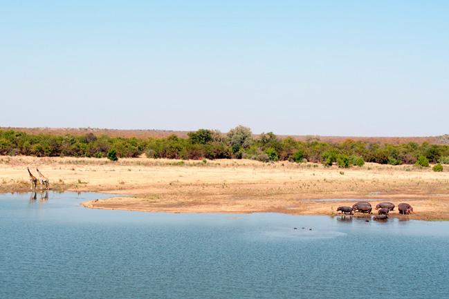 Le Parc Kruger avec Mungo Parkl
