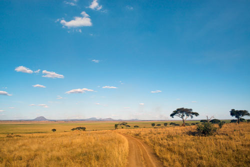Safari Tanzanie nord exceptionnel migration massai mara Kuro tarangire lodge