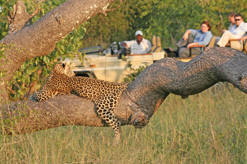 safari leopard big five afrique enfant famille luxe big five game drive safari exceptionnel region desertique savane