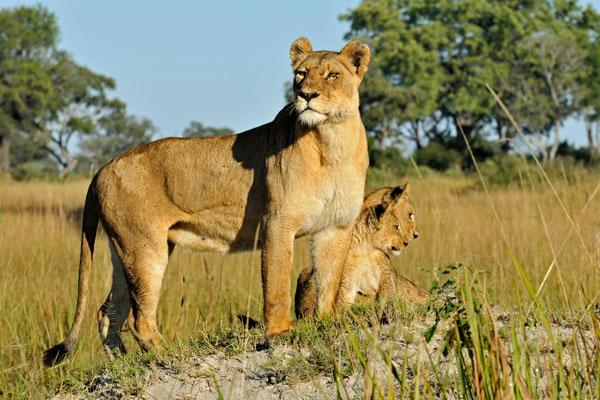 Delta de l'Okavango Afrique Botswana animaux faune