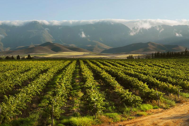 Vignobles sur le route du vin en Afrique du Sud