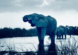 Safari avec des éléphants en compagnie de Mungo Park