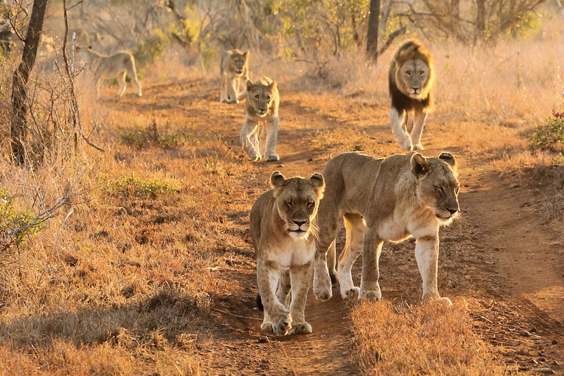 agence de voyage sur mesure agence de voyage safari afrique