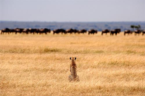 Safari Afrique Agence voyage genève