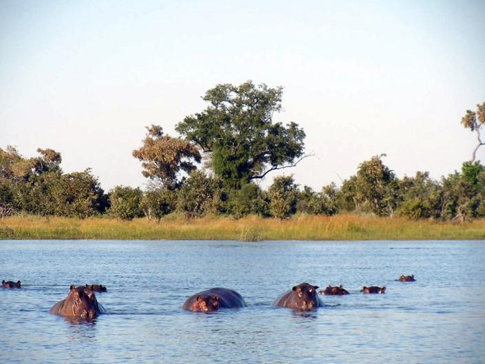 Les hippos - il faut faire très attention