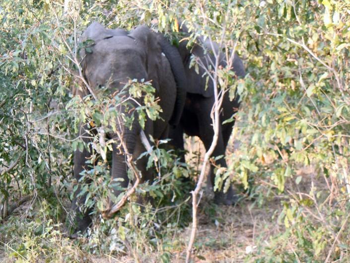 Un jeune éléphant