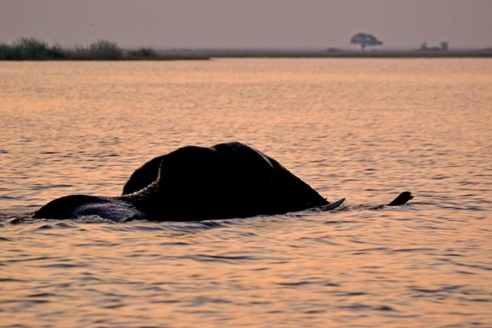 Rivière Chobe - l'éléphant se baigne