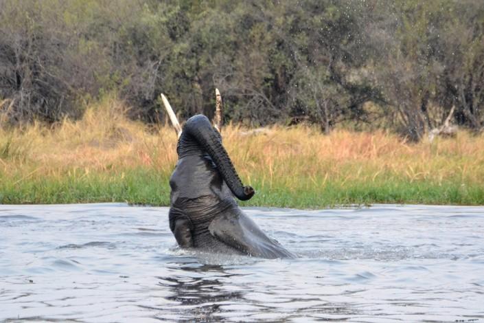éléphant qui profite de l'eau