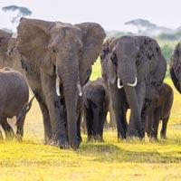 safari amboseli kenya agence specialiste suisse afrique