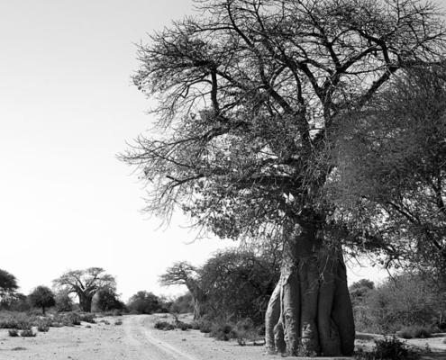 voyage sur mesure afrique du sud limpopo road trip