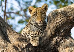 quand partir safari saison animaux météo