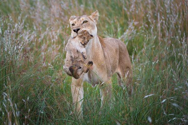saison safari mois animaux
