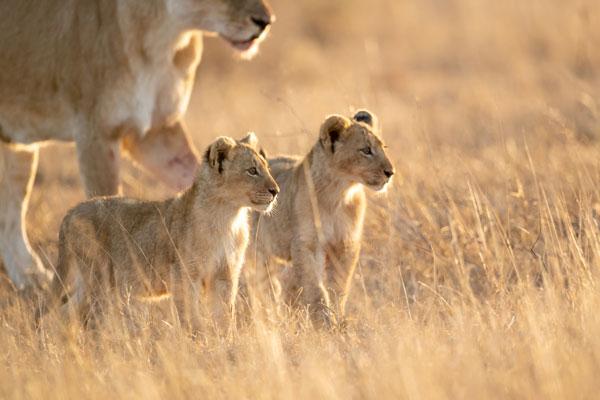 quand partie en safari saison animaux