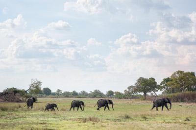 safari okavango delta afrique sur mesure voyage luxe afrique