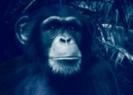 Voyage en Tanzanie pour voir des Chimpanzes