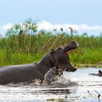 chobe parc national safari sur mesure botswana agence mungo park