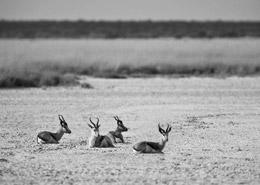 namibie voyage sur mesure agence specialisée etosha sossusvlei twyfelfontein mungo park