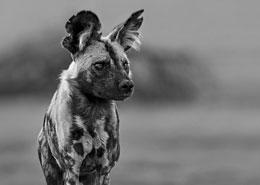 road trip afrique du sud mungo park agence specialisée afrique sur mesure