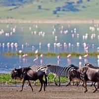 safari cratere ngorongoro luxe exclusif sur mesure suisse geneve mungo park