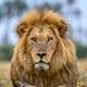 botswana delta okavango voyage safari luxe haut de gamme exclusif privé agence spécialisée