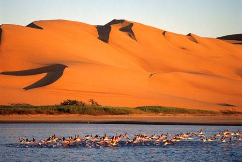 safari namibie dune
