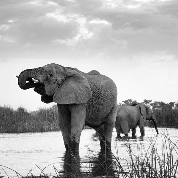 safari botswana exclusive luxe sur mesure agence specialisee mungo park