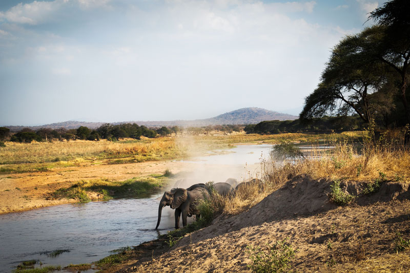 safari tanzanie sauvage inoubliable selous game reserve Ruaha confort luxe aventurier