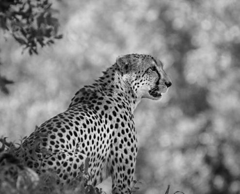 esprit okavango safari sur mesure botswana agence specialisée suisse