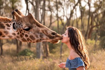 giraffe center kiss nairobi safari sur mesure afrique voyage
