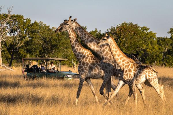 quelle période partir en safari animaux saison Afrique