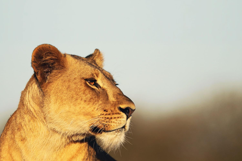 agence de voyage pour l'afrique du sud, Mungo Park cree des voyages sur mesure pour vous