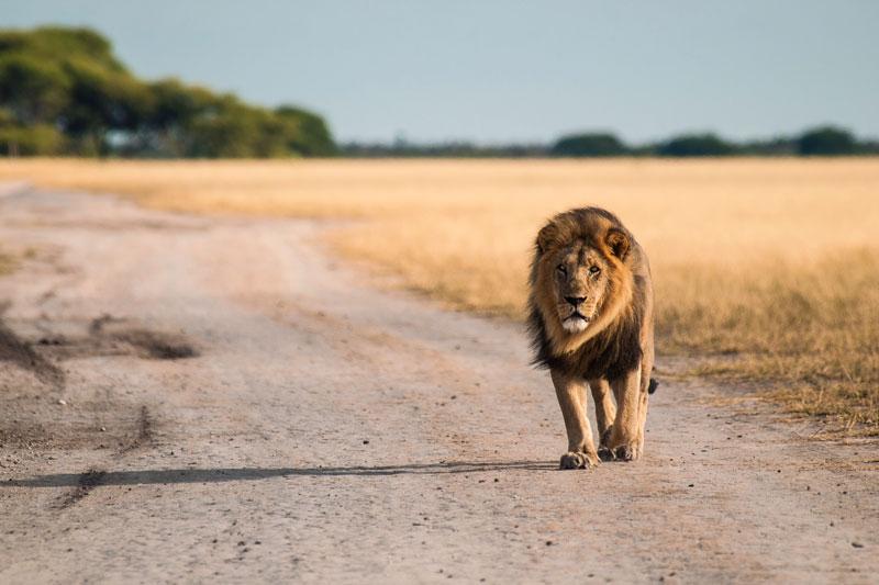 safari en afrique agence voyage sur mesure afrique du sud botswana