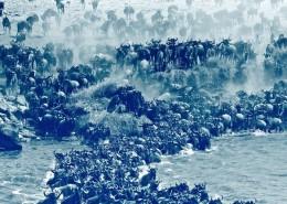 migration dans le serengeti, circuit safari dans la tanzanie du nord