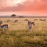 desert kalahari voyage sur mesure botswana agence spécialisée mungo park