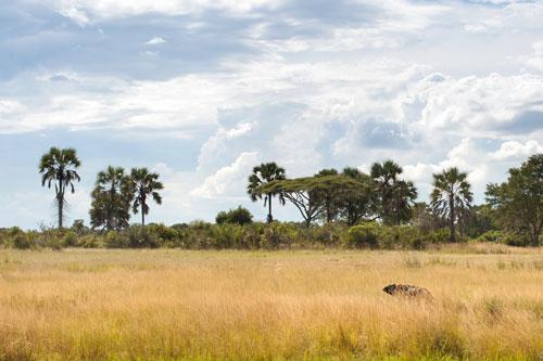 Parc National de Katavi, des safaris exceptionnels hors des sentiers battus