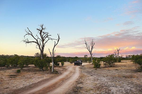 visite Kruger Afrique du Sud nature